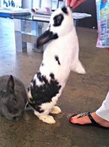 Sequin Bunny 2