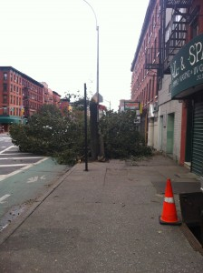 A tree down in front of the nail salon I go to on 1st Avenue.