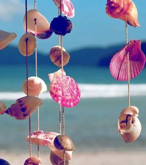 pink shells