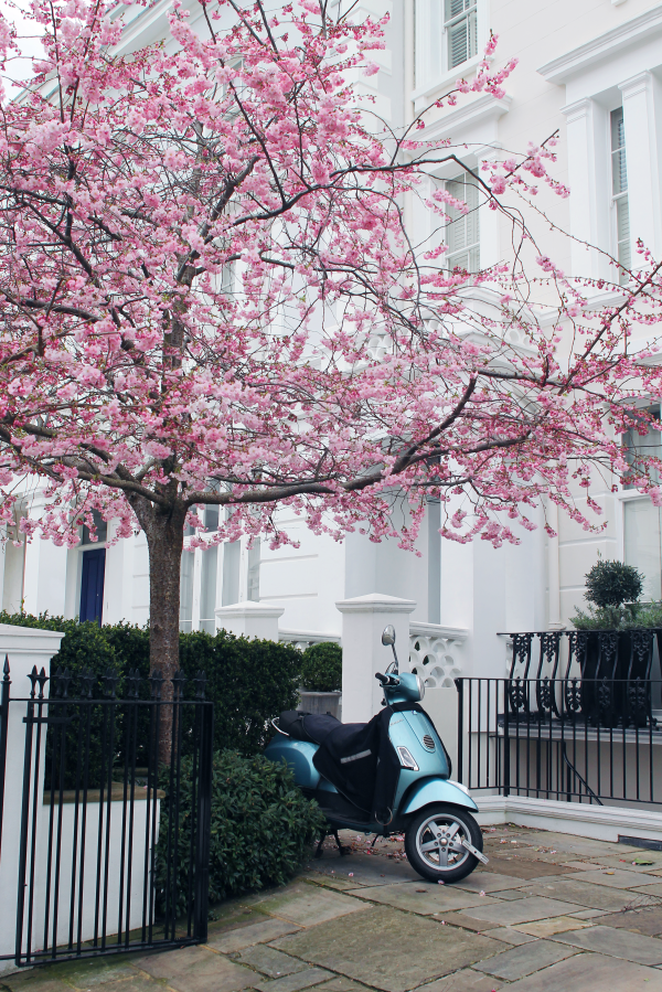 blue-vespa-notting-hill-cherry-blossom-tree