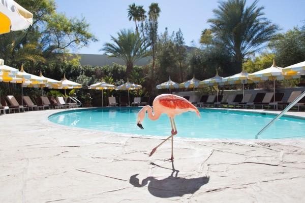 gray malin at the parker flamingo