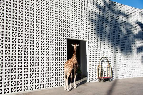 gray malin at the parker giraffe valet