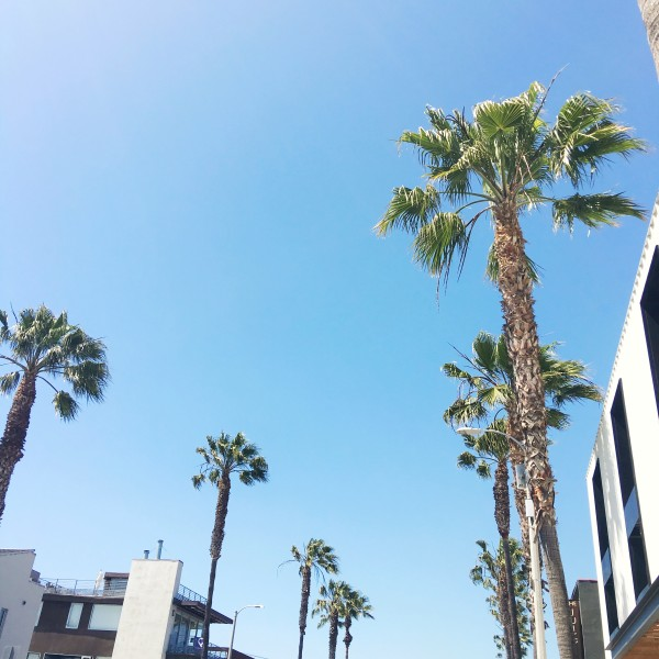 palm trees los angeles california city travel guide