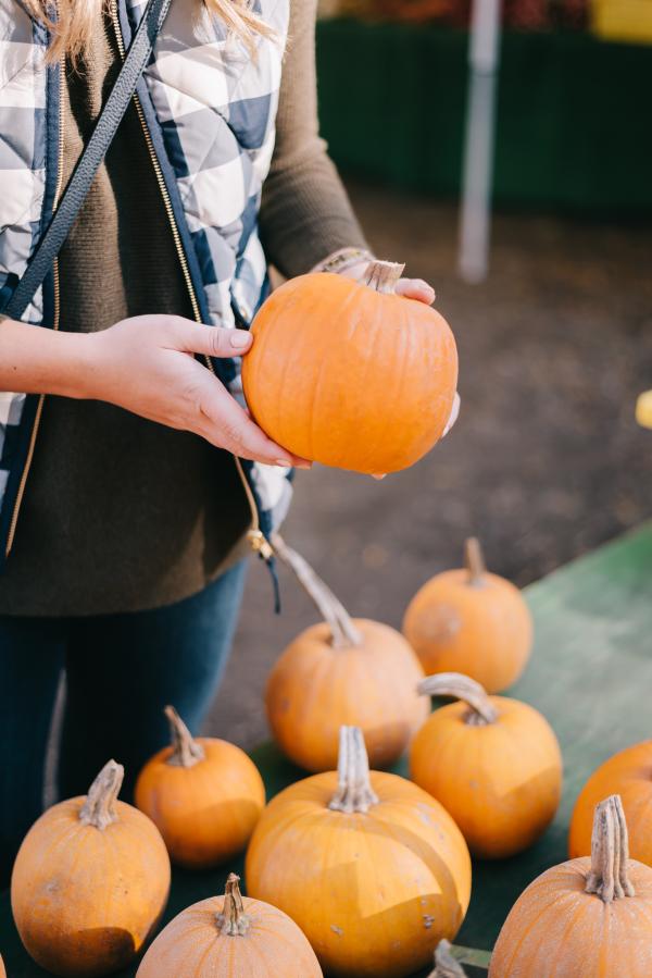 pumpkin-picking-chicago