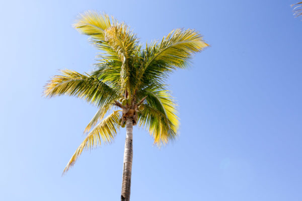 Jessica Sturdy shares photos from exploring San Jose del Cabo in Mexico. Palm tree and bright blue skies.