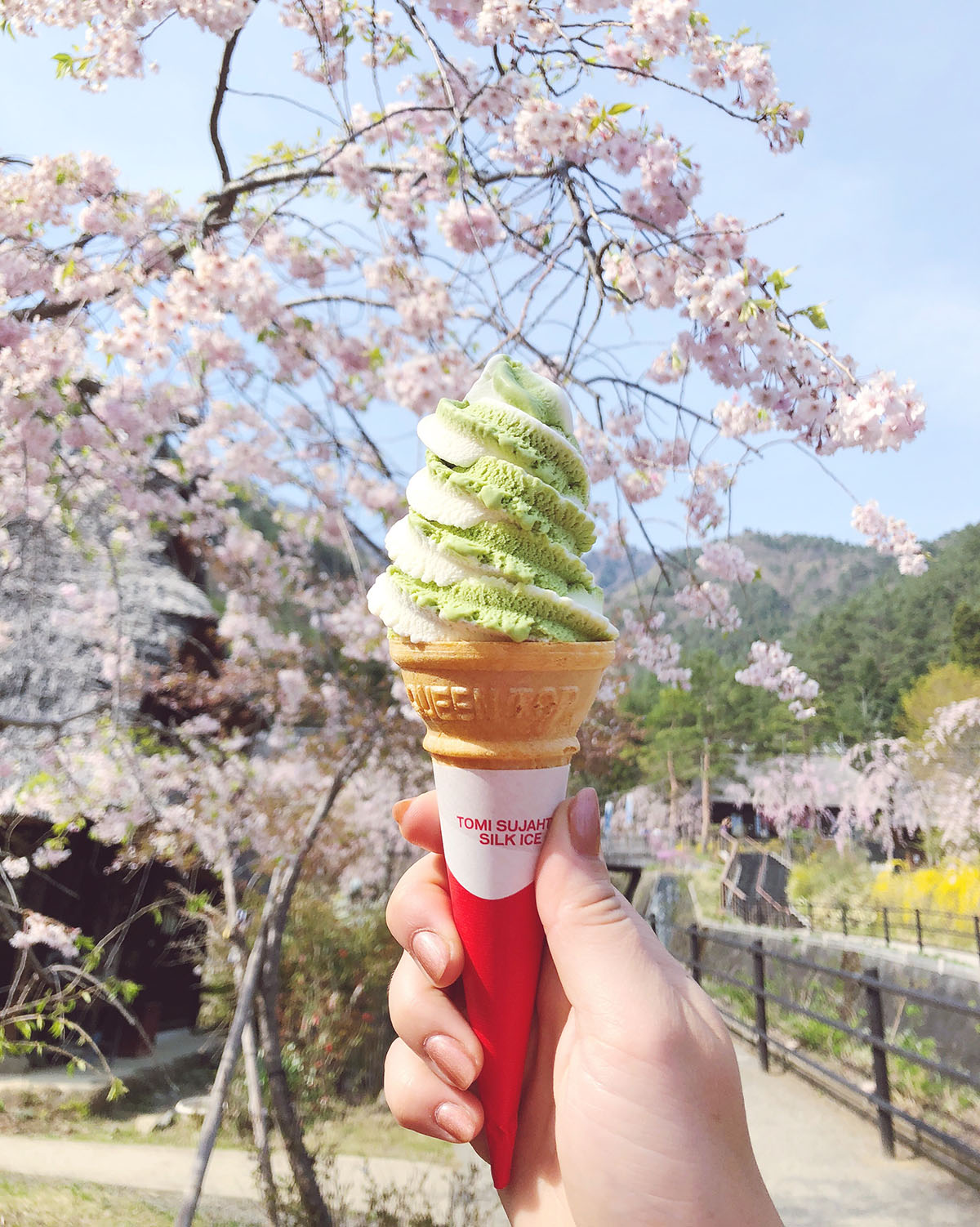 Jessica Sturdy Japan Travel Guide -- Matcha Soft Serve Ice Cream in front of Cherry Blossom Trees with Blue Skies near Mt Fuji